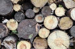 Текстура журналов дерева Стоковые Фотографии RF