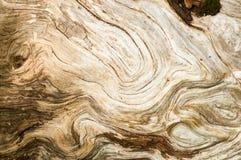 Текстура журнала Driftwood Стоковые Изображения