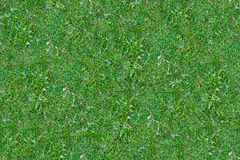 Текстура заводов травы и земли Стоковое Изображение