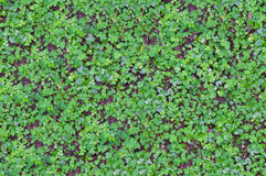 Текстура заводов травы и земли Стоковая Фотография