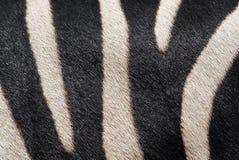 Текстура зебры Стоковое Изображение RF