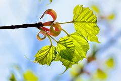 Текстура зеленого растения Стоковые Изображения