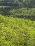 текстура зеленого цвета пущи Стоковое Изображение RF