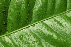 текстура зеленых листьев солнечная Стоковые Изображения RF