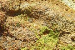 Текстура зеленого мха на камне Стоковое Фото