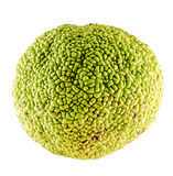 Текстура зеленого плодоовощ pomifera Maclura Стоковое Фото