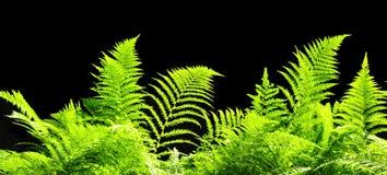 Текстура зеленого растения, знамя Стоковое Изображение
