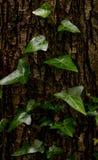 Текстура зеленого растения Стоковое Фото