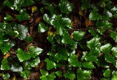 Текстура зеленого растения Стоковая Фотография