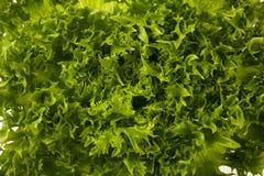 Текстура зеленого салата Стоковые Фото