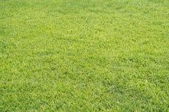 текстура зеленого цвета травы предпосылки Стоковые Фото