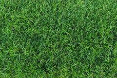 текстура зеленого цвета травы Стоковое фото RF