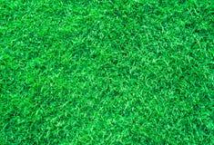 текстура зеленого цвета травы Стоковое Изображение RF