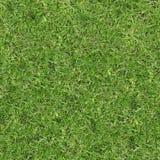 Текстура зеленой травы безшовная Безшовный в горизонтальных и вертикальных размерах Стоковое фото RF