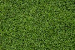 Текстура зеленой травы безшовная Стоковые Фотографии RF