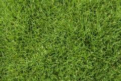 Текстура зеленой травы безшовная Стоковое фото RF