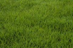 Текстура зеленой травы безшовная Стоковая Фотография RF