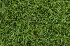 Текстура зеленой травы безшовная Стоковые Изображения RF