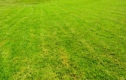 Текстура зеленой травы безшовная Стоковое Фото