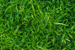 Текстура зеленой травы как предпосылка Стоковые Изображения RF