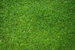 Текстура зеленой травы как предпосылка Стоковые Изображения