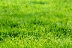 Текстура зеленой травы крупного плана Стоковые Фотографии RF