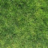 Текстура зеленой травы на верхней картине Стоковое Фото