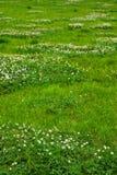 Текстура зеленой травы от поля Стоковое фото RF