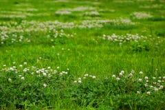 Текстура зеленой травы от поля Стоковое Изображение