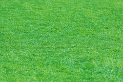 Текстура зеленой травы с полем Стоковая Фотография