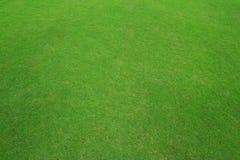 Текстура зеленой травы Стоковые Фото