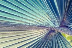 Текстура зеленых лист ладони - изображение запаса Стоковые Фотографии RF