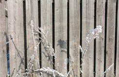 Текстура зимы деревянной загородки Стоковые Изображения RF