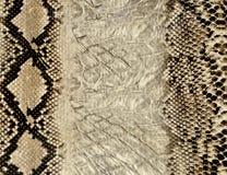 текстура змейки кожи Стоковые Фотографии RF