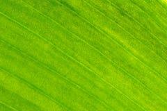 Текстура золота лист Стоковые Изображения