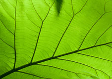 Текстура дизайна природы на зеленой листве Стоковое Изображение RF