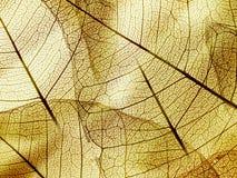 Текстура листвы Брайна Стоковое фото RF