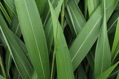 Текстура листвы Стоковое Изображение RF