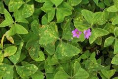 Текстура листвы Стоковое Фото