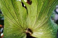 текстура листьев предпосылки зеленая Стоковые Изображения RF