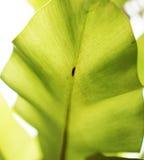 текстура листьев предпосылки зеленая Стоковые Фото