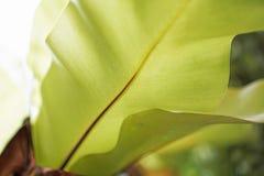 текстура листьев предпосылки зеленая Стоковая Фотография RF