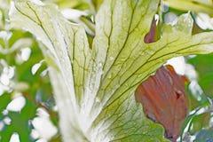 текстура листьев предпосылки зеленая Стоковое Изображение RF