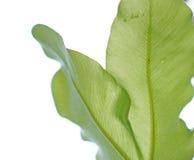 текстура листьев предпосылки зеленая Стоковые Изображения