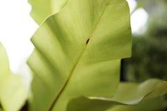 текстура листьев предпосылки зеленая Стоковое Фото