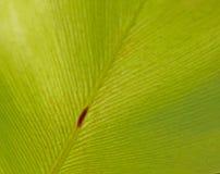 текстура листьев предпосылки зеленая Стоковая Фотография