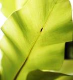 текстура листьев предпосылки зеленая Стоковые Фотографии RF