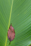 Текстура лист ладони закрытая-вверх Стоковое фото RF