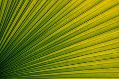 Текстура лист ладони обременительного имущества Стоковое фото RF