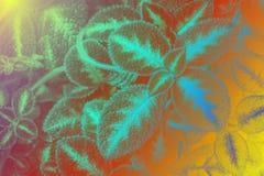 Текстура лист или предпосылка лист Стоковое фото RF